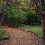 Wooded path at Eating Disorder Treatment Centers
