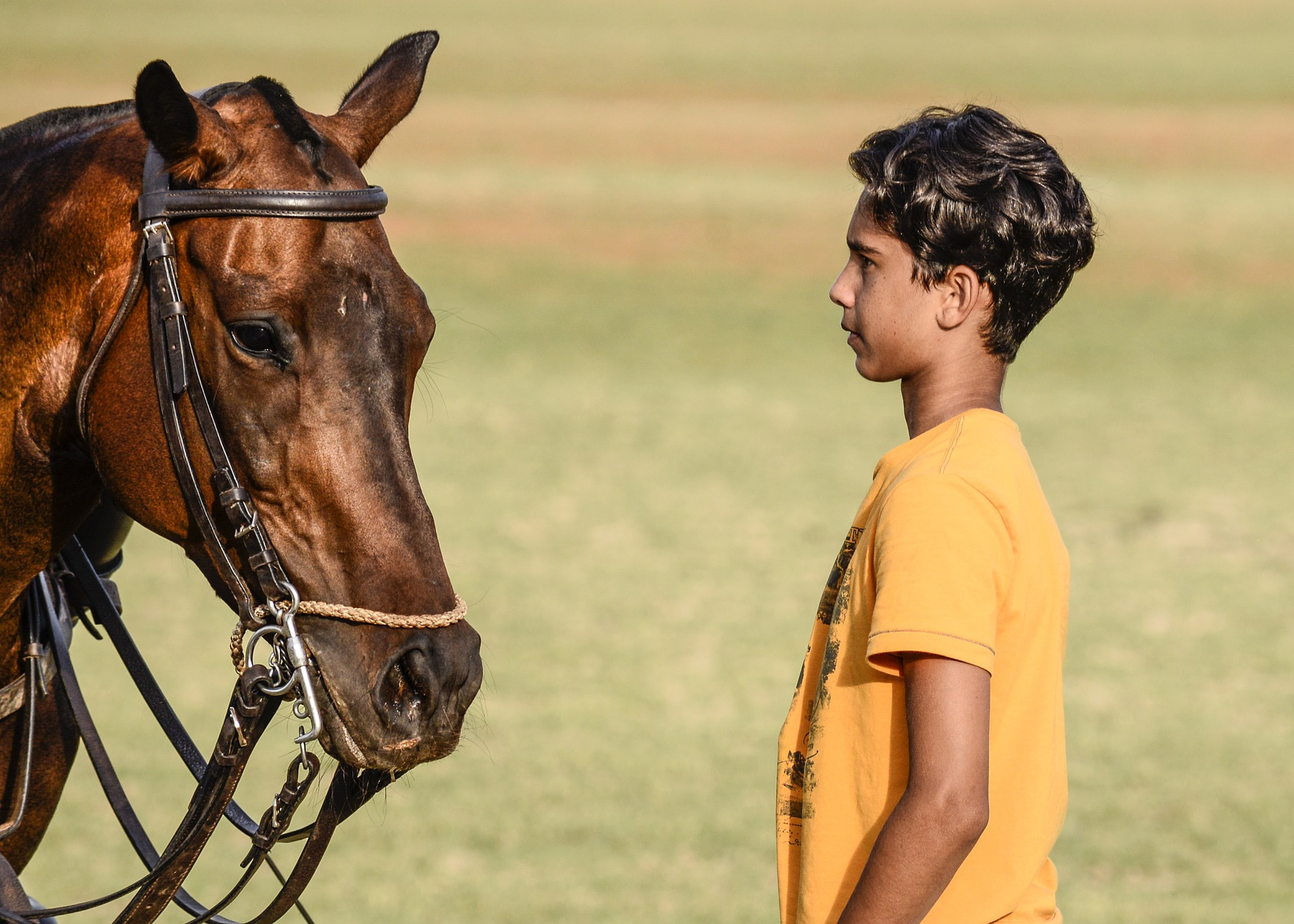 Boy Staring At A Horse used in Equine Therapy