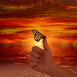 picture of butterfly on thumb