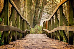 Nature Bridge in Forest