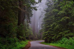 Nature Road Through Redwood National Park